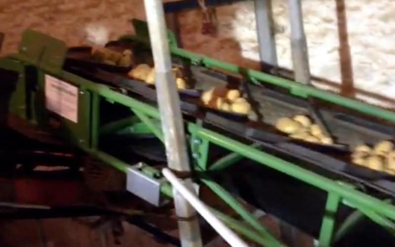 Convoyeur à bande Tecnitude pour le transport de pomme de terre